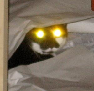 Pseudo Science >> Revisiting Schrödinger's Cat | Galileo's Pendulum