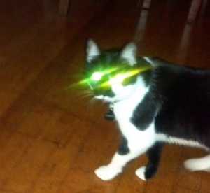 Harriet the cat will shoot you with her laser eyes.