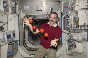 Canadian astronaut Chris Hadfield aboard the International Space Station (ISS), demonstrating weightlessness with tomatoes. [Credit: International Business Times]