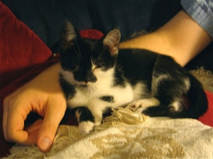 Today's post was tough to write, so here's my cat Harriet when she was a tiny kitten.