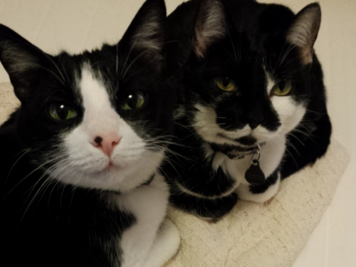 My cats, Pascal and Harriet. [Credit: moi]